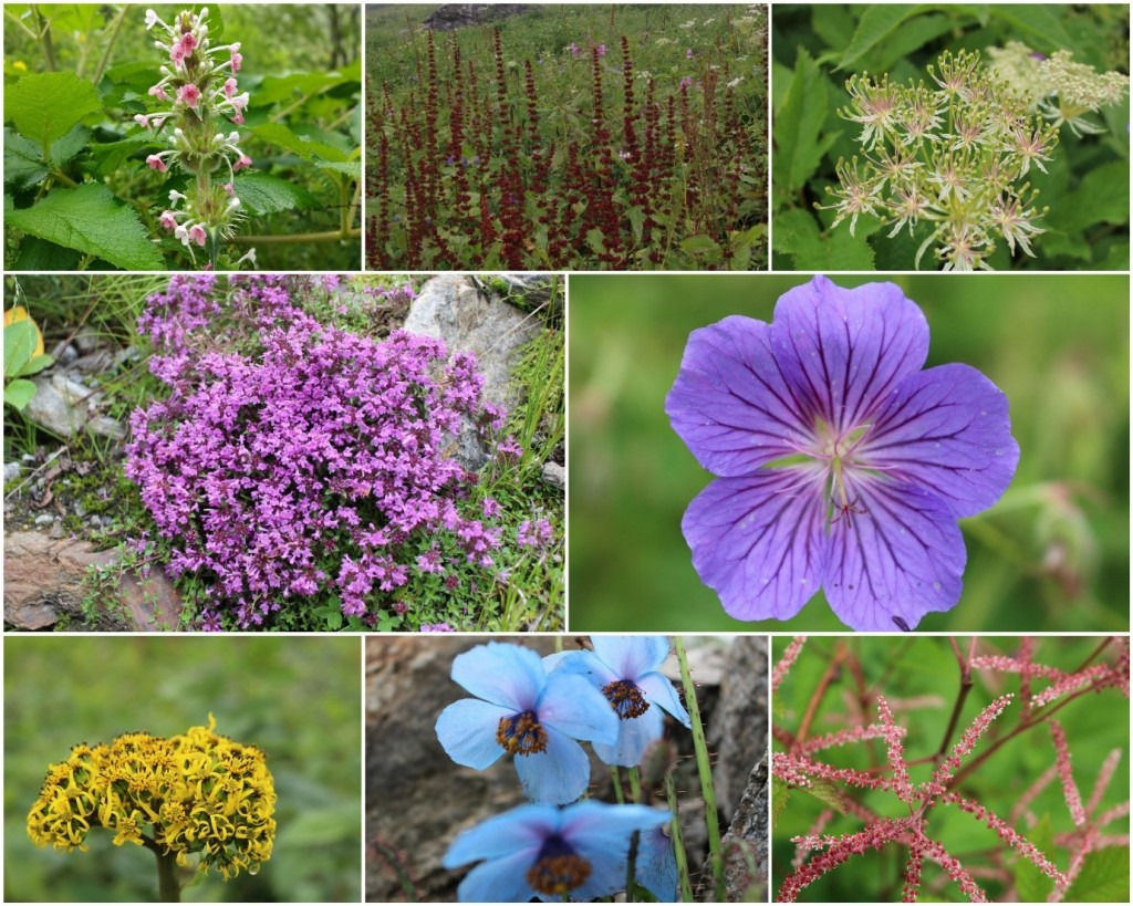 Bright and beautiful flowers from the Valley of Flowers trek!